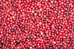 Background of Cranberry. The eatable background, mature Cranberries Stock Photos