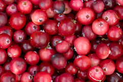Background from cranberry berries. The pattern  from fresh ripe red berries of a cranberry. A close up Stock Image