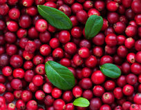 Background of Cranberry Royalty Free Stock Image