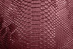 Background of crocodile skin. Background of red crocodile skin textured Stock Images