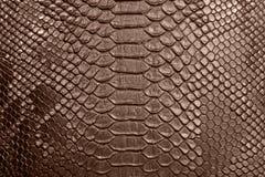 Background of crocodile skin. Textured Royalty Free Stock Image
