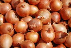 Background from a crop onion Royalty Free Stock Images