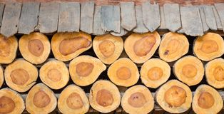 Background of cross section of tree trunks, used as wall Royalty Free Stock Image