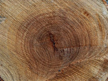 Background of cross sectiontree trunk, clearly visible annual rings. Tree felling. Stock Photos