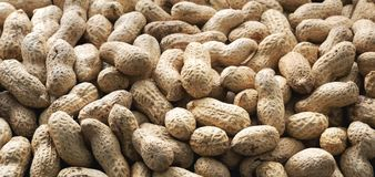 Crude peanuts. Panorama. Banner, advertising, large format. Background of crude peanuts. Panorama. Banner stock image