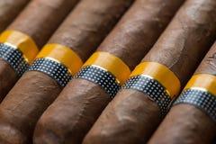 Background  cuban cigars Royalty Free Stock Image