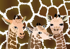 Background with cubs giraffe. Stock Images