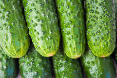 Background of the cucumbers. Background of fresh green cucumbers Royalty Free Stock Images