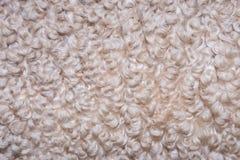 Background of  curly merino wool Stock Photos