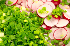 Background of cut radishes and onions Stock Image
