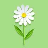 Background with 3d chamomile. Beautiful trendy nature background with 3d chamomile cutting paper. Stylized summer flowers  over green. Stylish floral wallpaper Royalty Free Stock Photography