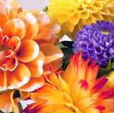 Background with dahlias Stock Images
