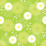 Background with daisies. Fresh vector seamless background with daisies Stock Images