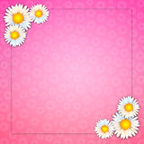 Background with daisies Royalty Free Stock Photos