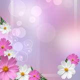 Background with   daisies Stock Photos