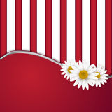 Background with daisies Stock Images