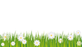 Background daisies Royalty Free Stock Photography