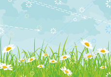 Background daisy  Stock Image
