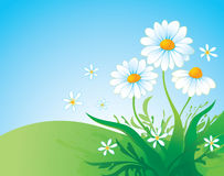 Background with daisy Stock Image