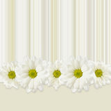 Background with daisy flowers line Royalty Free Stock Image