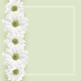 Background with daisy flowers line. Gray background with daisy flowers line and frame Royalty Free Stock Image