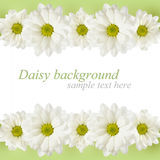 Background with daisy flowers lines Stock Photography