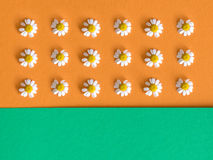 Background with daisy flowers onorage and green background. Royalty Free Stock Photography