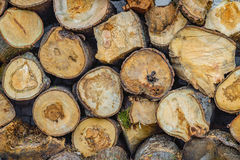 Background damaged logs stacked in piles. Logs stacked in piles. damaged wood texture background Royalty Free Stock Photo