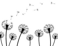 Background dandelion faded silhouettes Royalty Free Stock Photo
