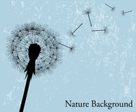 Background with dandelion. Silhouette of the expanding dandelion on a light blue background Stock Photo