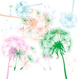 Background with dandelions Royalty Free Stock Photo