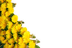 Background of dandelions Royalty Free Stock Photography