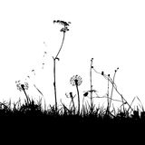 The Background with Dandelions and Weeds. Traced vector Stock Images