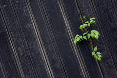 Background of a dark brown wooden fence Stock Image