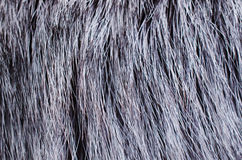 Background of dark fur Royalty Free Stock Image