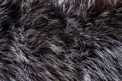 Background of dark fur Stock Image