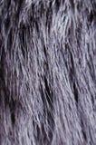 Background of dark fur Royalty Free Stock Image