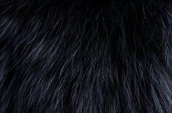 Background of dark fur Stock Photo