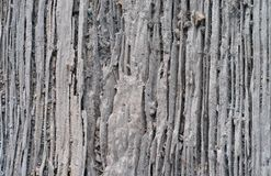 Background of Decay Wood Royalty Free Stock Image