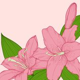 Background decorated with beautiful pink lilies in the corner Stock Photography