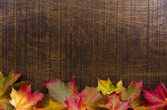 A background decorated with colourful autumn leaves, with copy s Stock Photos