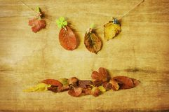 Colorful autumn leaves on a wooden board stock photography