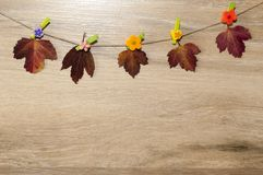 Colorful autumn leaves in a wooden board royalty free stock images