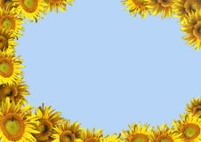 Background - decorative framework from sunflowers Stock Images