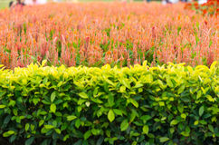 Background of decorative ornamental gardens Royalty Free Stock Images