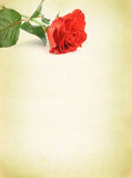 Background with decorative rose Stock Photography