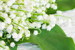 Background of delicate florets lily of the valley closeup. Stock Images