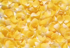 Background of delicate yellow flower petals Stock Images