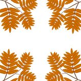 Background for a design with the autumn leaves of wild ash Royalty Free Stock Photo
