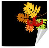 Background for a design with the autumn leaves of wild ash Royalty Free Stock Photography